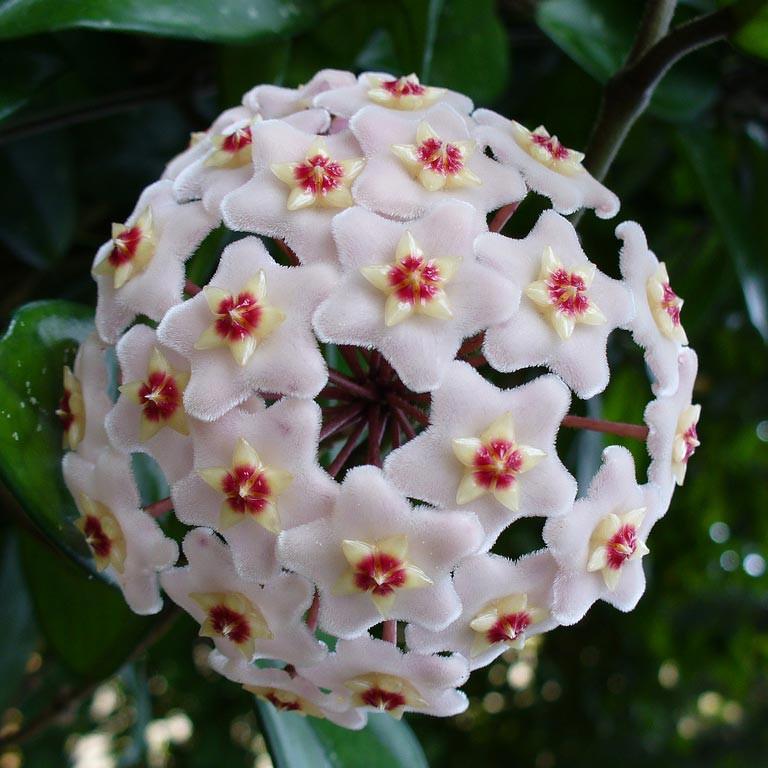 16 bông hoa cánh đều tăm tắp làm vừa lòng những người mắc ám ảnh rối loạn cưỡng chế - Ảnh 31.