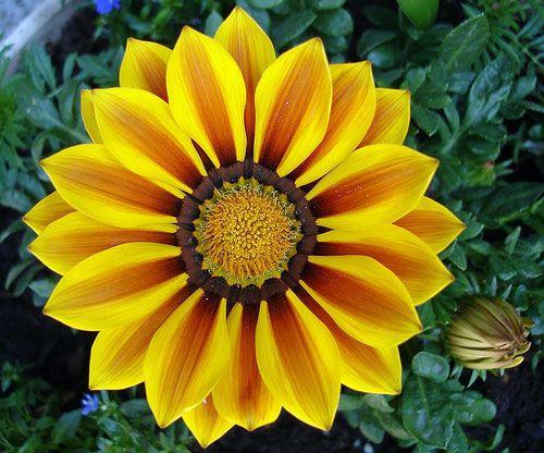 16 bông hoa cánh đều tăm tắp làm vừa lòng những người mắc ám ảnh rối loạn cưỡng chế - Ảnh 27.