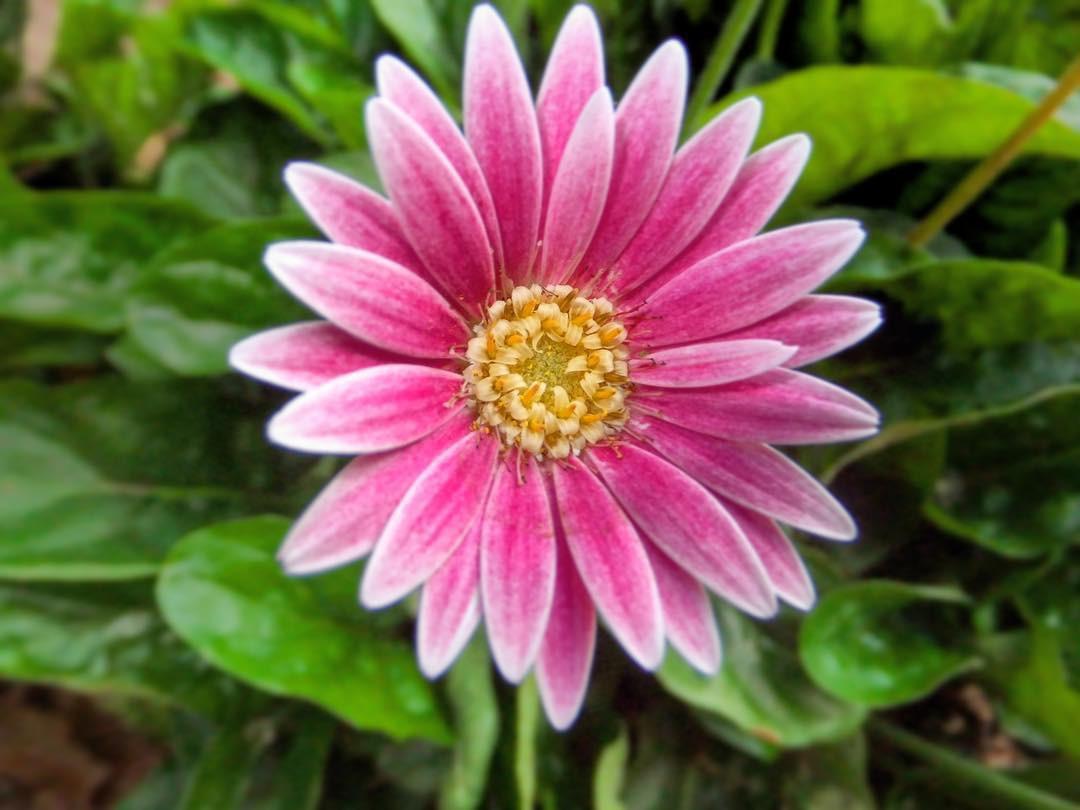 16 bông hoa cánh đều tăm tắp làm vừa lòng những người mắc ám ảnh rối loạn cưỡng chế - Ảnh 19.