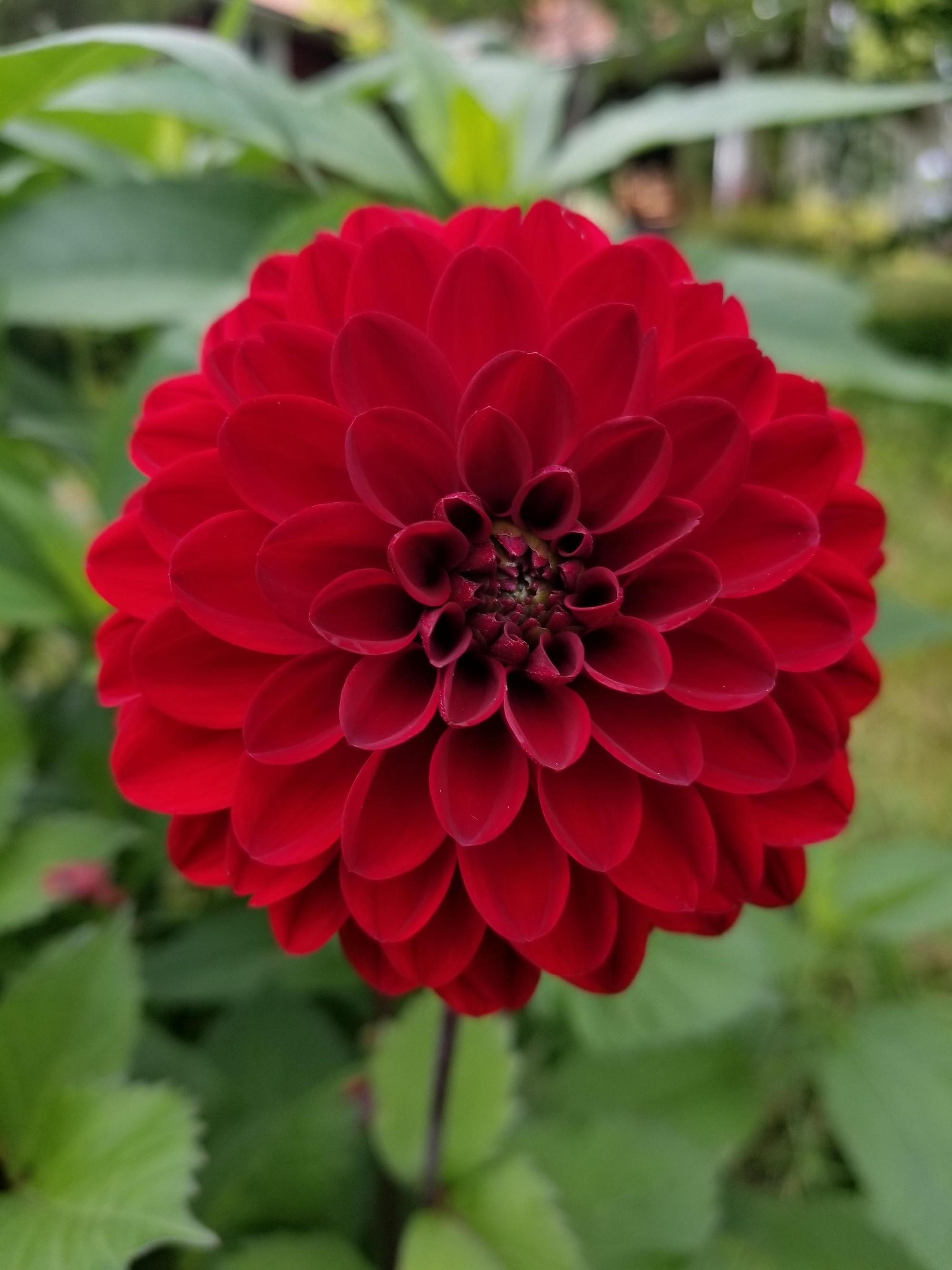 16 bông hoa cánh đều tăm tắp làm vừa lòng những người mắc ám ảnh rối loạn cưỡng chế - Ảnh 11.