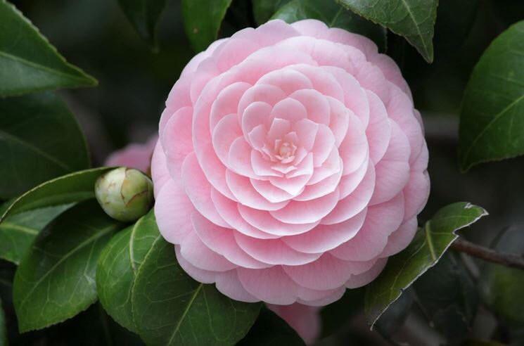 16 bông hoa cánh đều tăm tắp làm vừa lòng những người mắc ám ảnh rối loạn cưỡng chế - Ảnh 3.