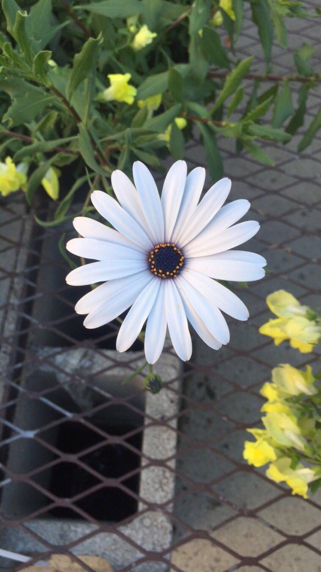 16 bông hoa cánh đều tăm tắp làm vừa lòng những người mắc ám ảnh rối loạn cưỡng chế - Ảnh 1.