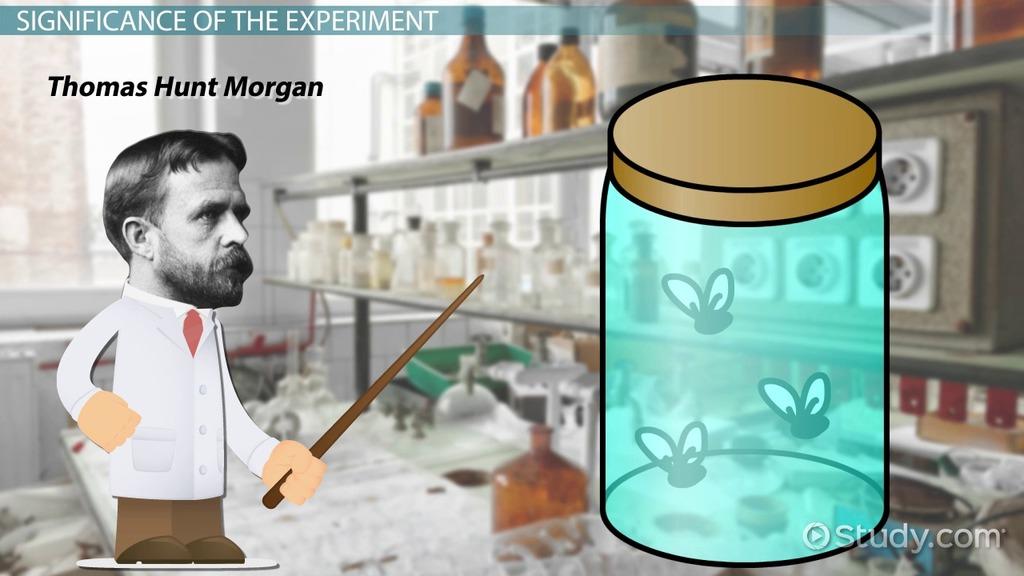 Bé bằng nửa hạt vừng nhưng loài sinh vật này lại đóng góp lớn trong nền nghiên cứu khoa học - Ảnh 5.