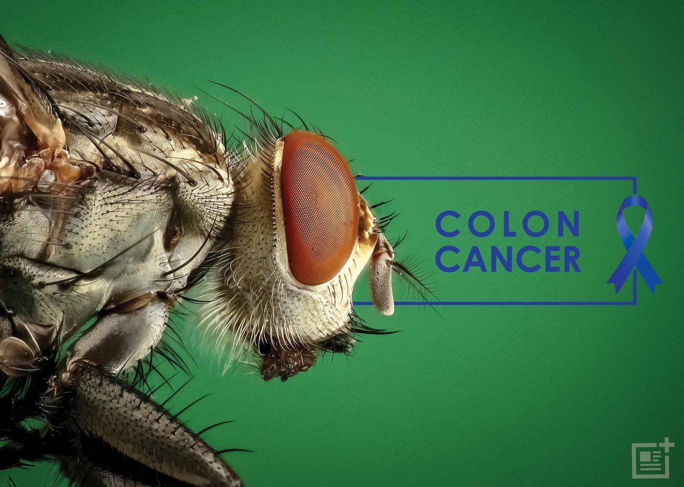 Bé bằng nửa hạt vừng nhưng loài sinh vật này lại đóng góp lớn trong nền nghiên cứu khoa học - Ảnh 3.