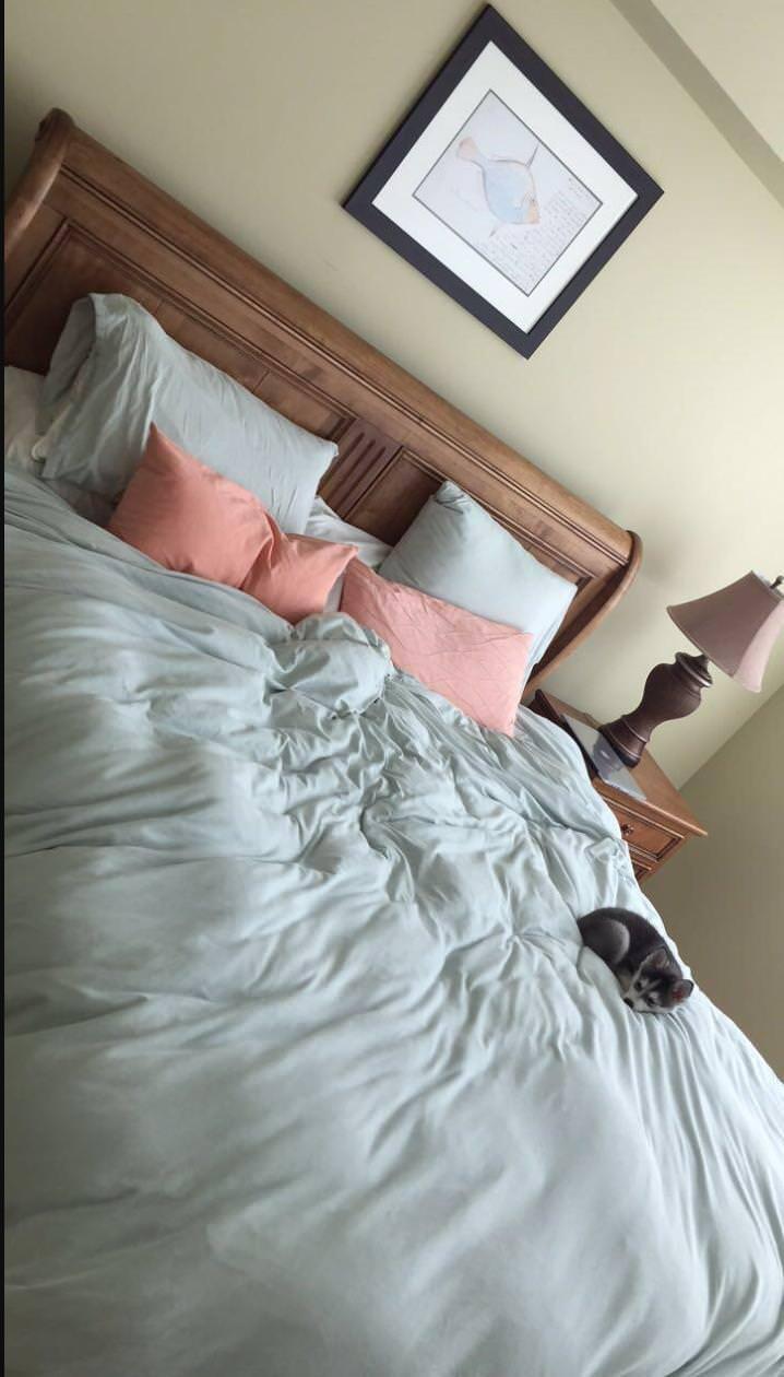 15 chú chó xấu tính chỉ thích độc chiếm một mình một giường mới chịu - Ảnh 25.
