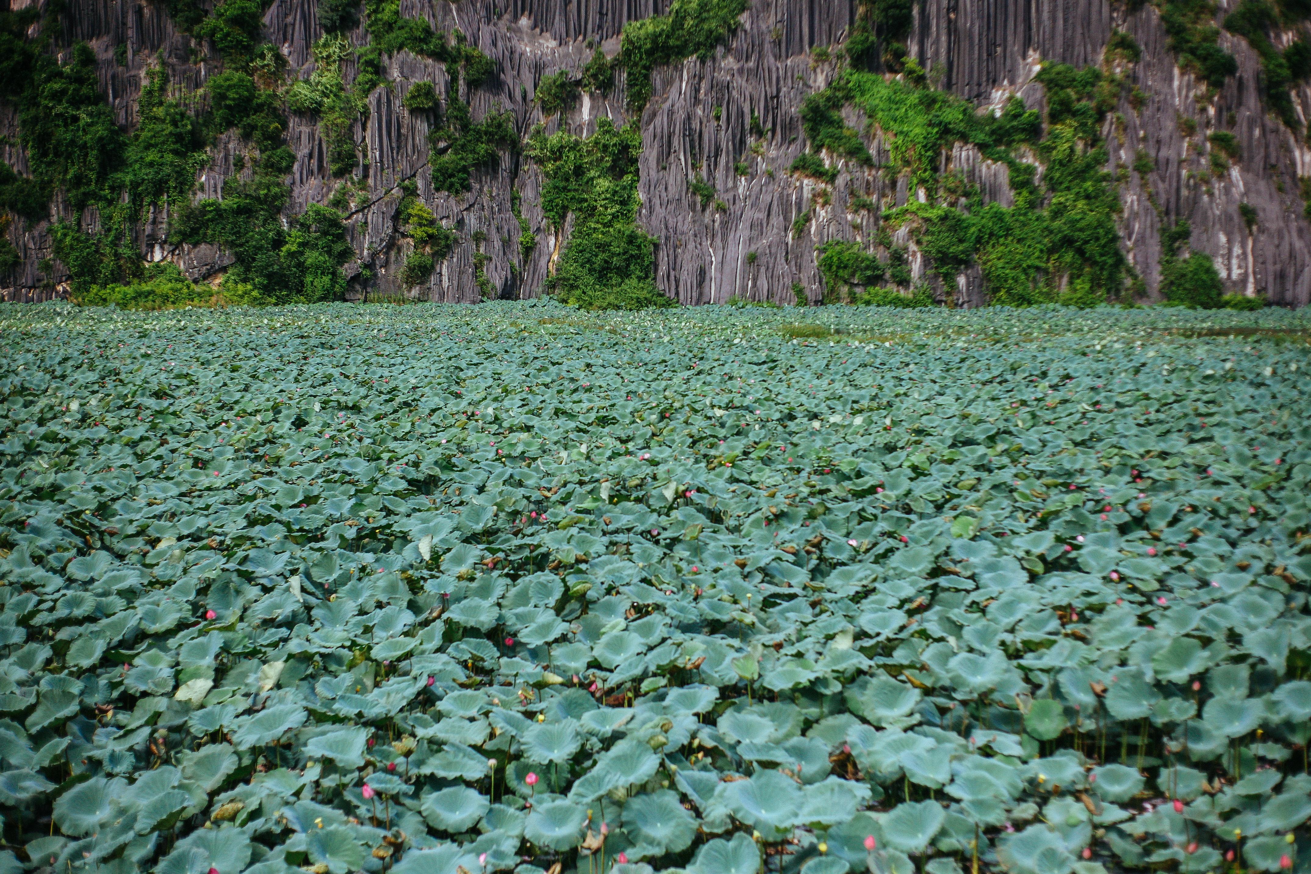 Sau Kong: Skull Island, hãy tới ngay Ninh Bình vì mùa xuân đang là thời điểm nơi đây đẹp nhất! - Ảnh 2.