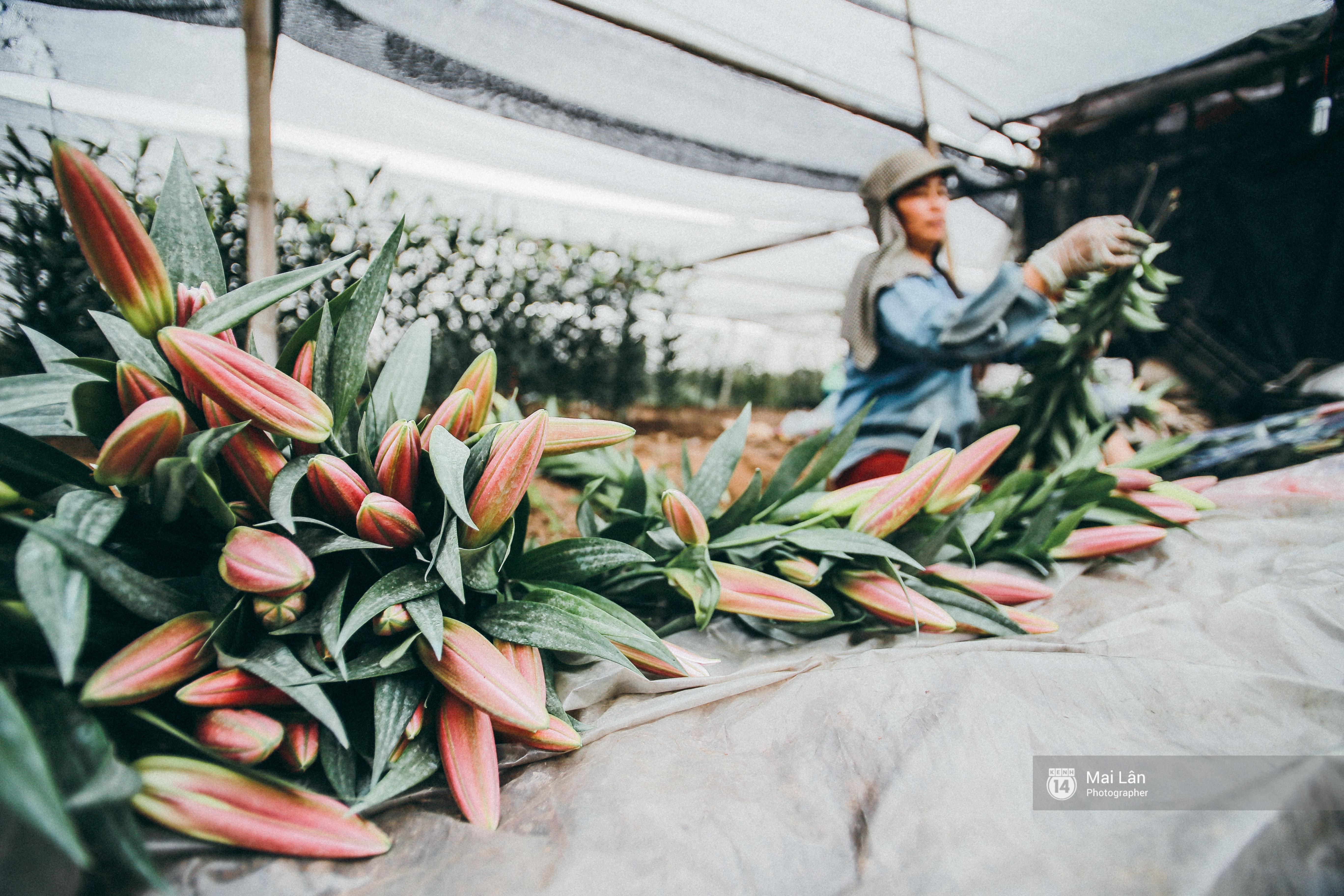 Mùa đông quá ngắn, bạn buồn vì không được mặc đồ lạnh, còn với các làng hoa ở Hà Nội - họ mất Tết! - Ảnh 4.