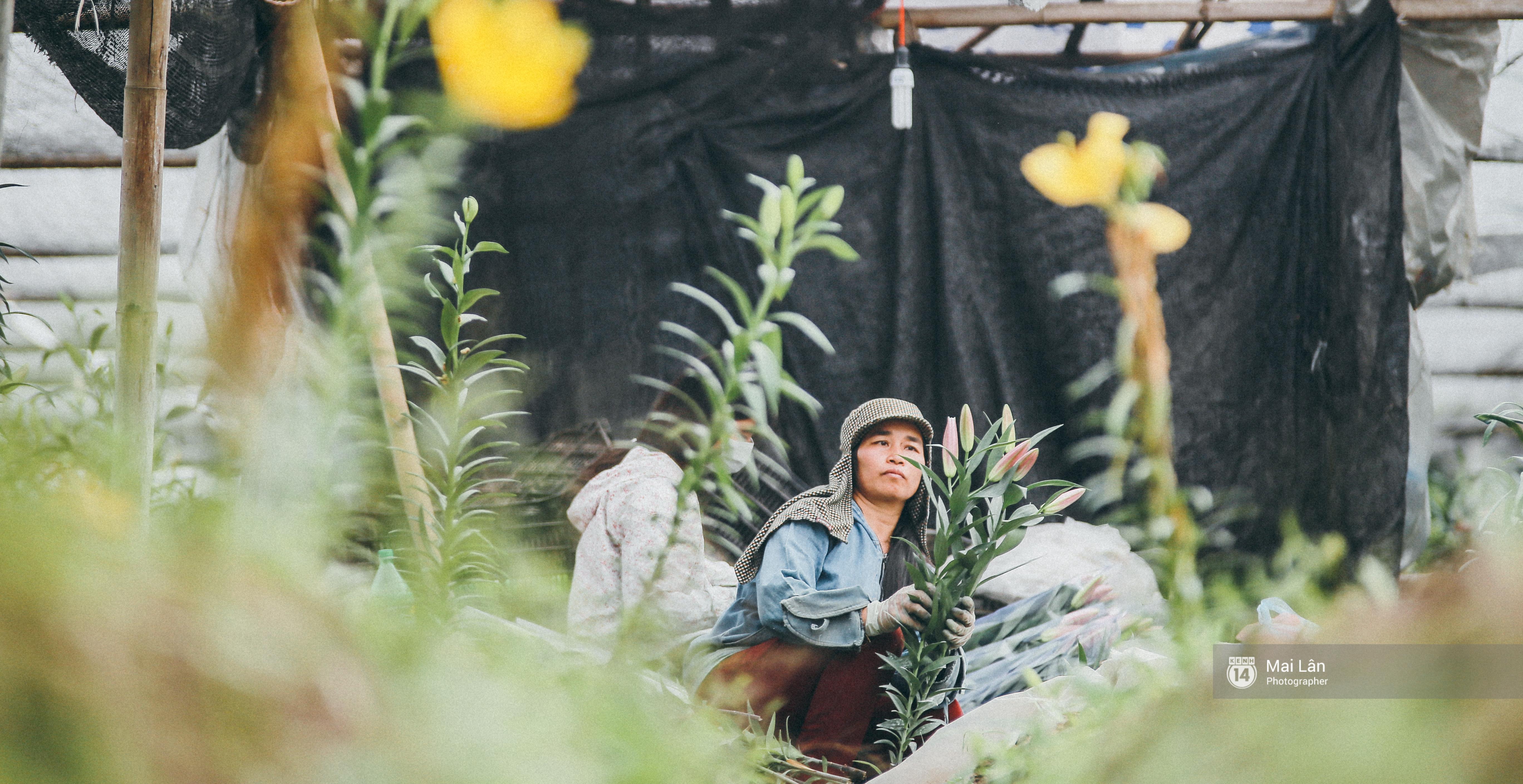 Mùa đông quá ngắn, bạn buồn vì không được mặc đồ lạnh, còn với các làng hoa ở Hà Nội - họ mất Tết! - Ảnh 7.