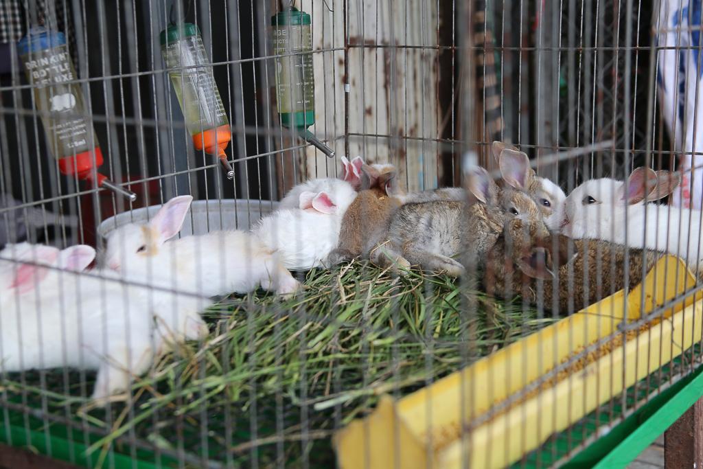 Chính thức xóa sổ 50 ki-ốt gần sân bay Tân Sơn Nhất, hàng trăm con chó mèo, thỏ con... không biết sẽ về đâu - Ảnh 10.