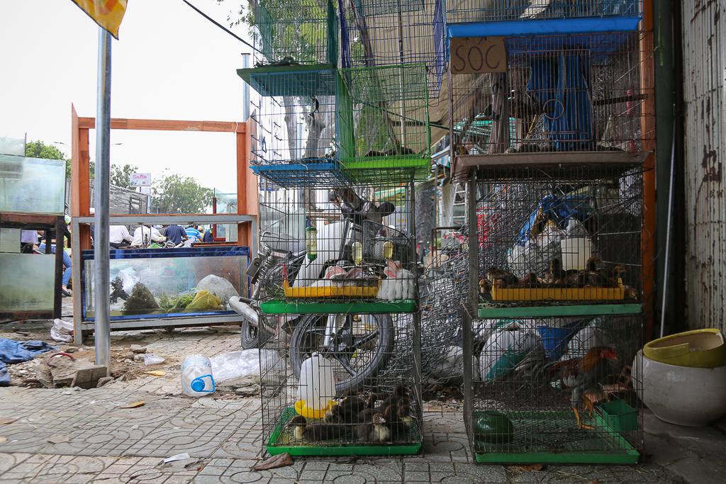 Chính thức xóa sổ 50 ki-ốt gần sân bay Tân Sơn Nhất, hàng trăm con chó mèo, thỏ con... không biết sẽ về đâu - Ảnh 9.