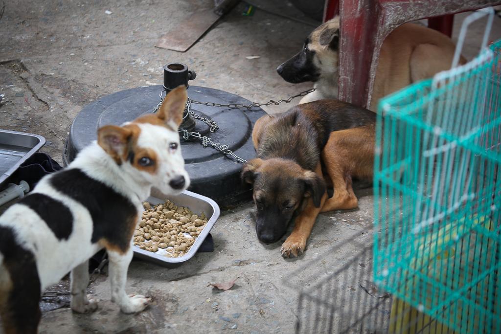 Chính thức xóa sổ 50 ki-ốt gần sân bay Tân Sơn Nhất, hàng trăm con chó mèo, thỏ con... không biết sẽ về đâu - Ảnh 8.