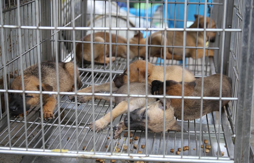 Chính thức xóa sổ 50 ki-ốt gần sân bay Tân Sơn Nhất, hàng trăm con chó mèo, thỏ con... không biết sẽ về đâu - Ảnh 6.