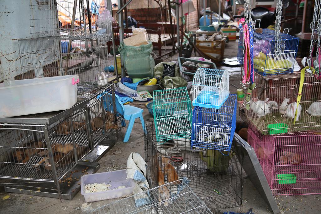 Chính thức xóa sổ 50 ki-ốt gần sân bay Tân Sơn Nhất, hàng trăm con chó mèo, thỏ con... không biết sẽ về đâu - Ảnh 5.