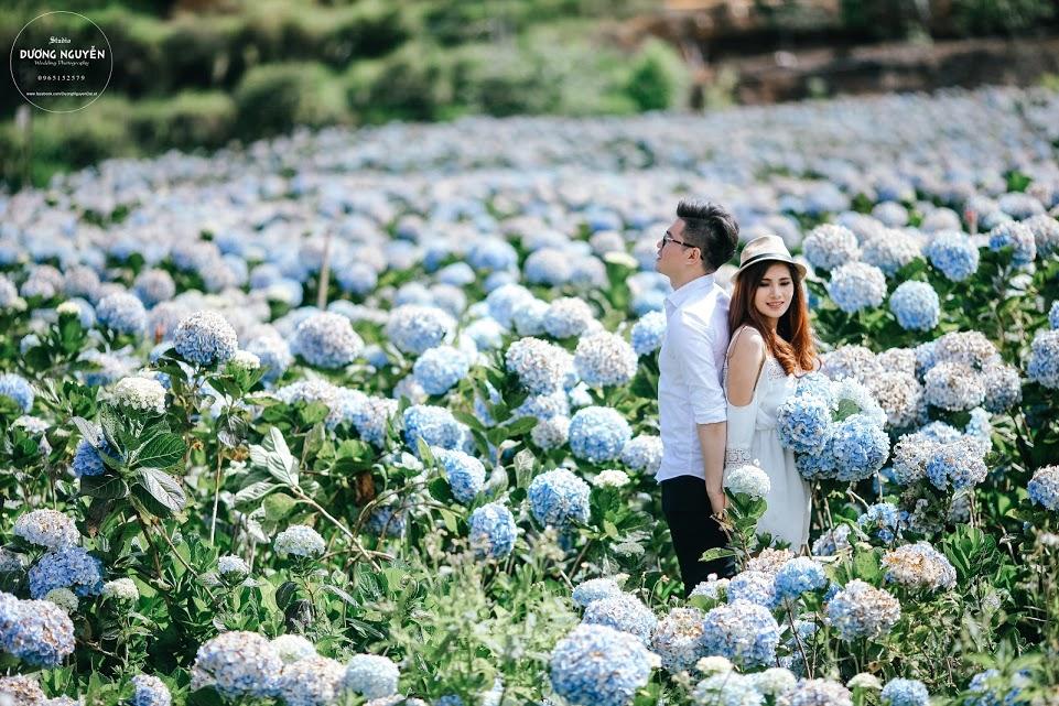 Cánh đồng hoa cẩm tú cầu đẹp mê hồn sẽ là điểm đến hot nhất ở Đà Lạt những ngày tới! - Ảnh 6.