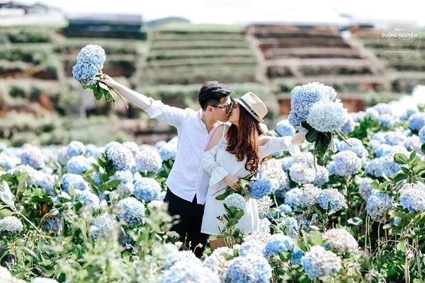 Cánh đồng hoa cẩm tú cầu đẹp mê hồn sẽ là điểm đến hot nhất ở Đà Lạt những ngày tới! - Ảnh 4.