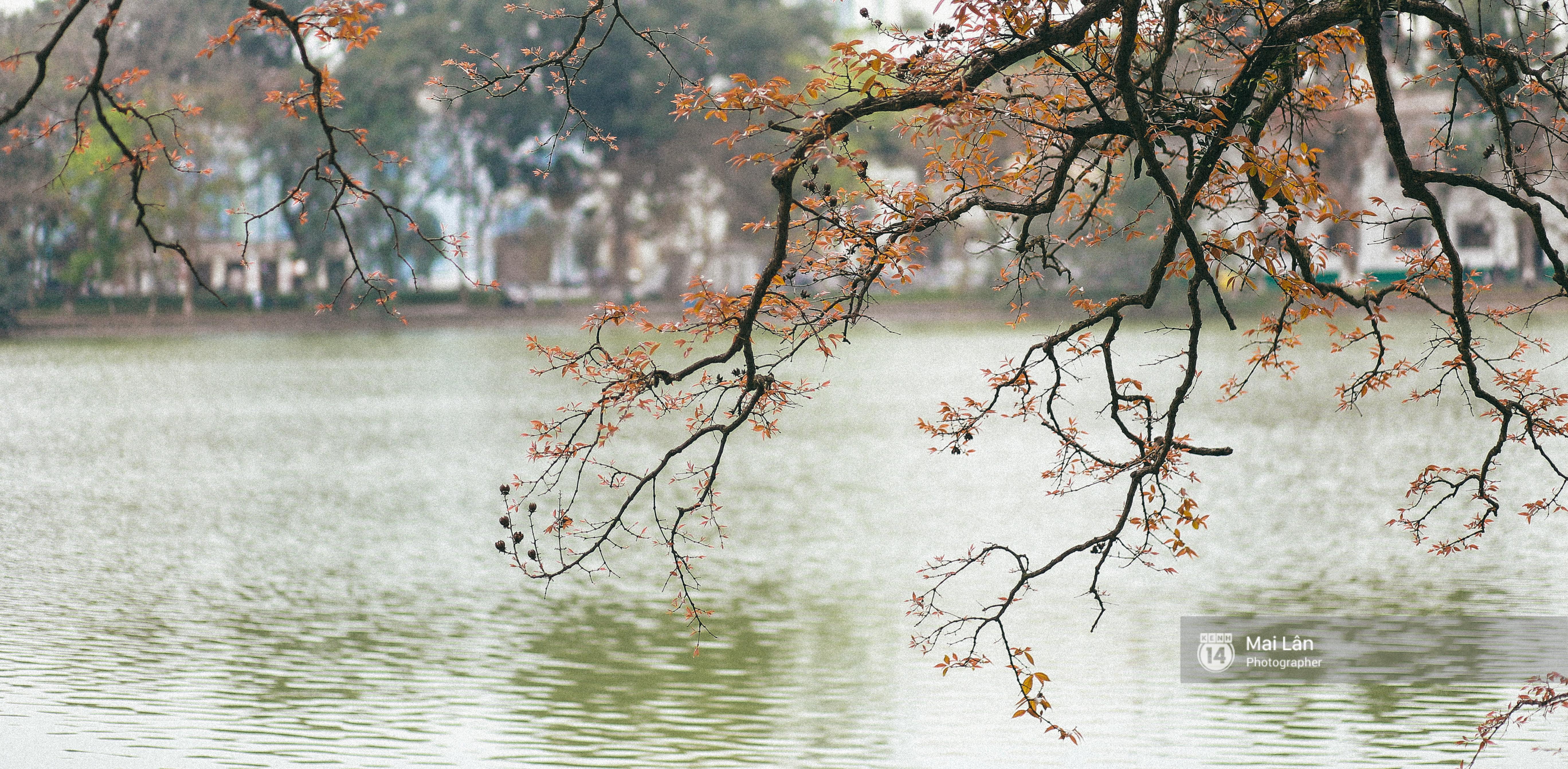 Hà Nội dịu dàng và xinh đẹp hơn trong sắc vàng của mùa cây thay lá