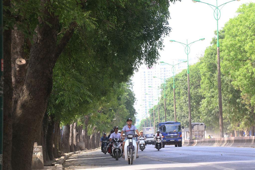 Hà Nội: Nhìn lại 1.300 cây xanh trên đường Phạm Văn Đồng sẽ bị chặt hạ trong 3 tháng tới - Ảnh 4.