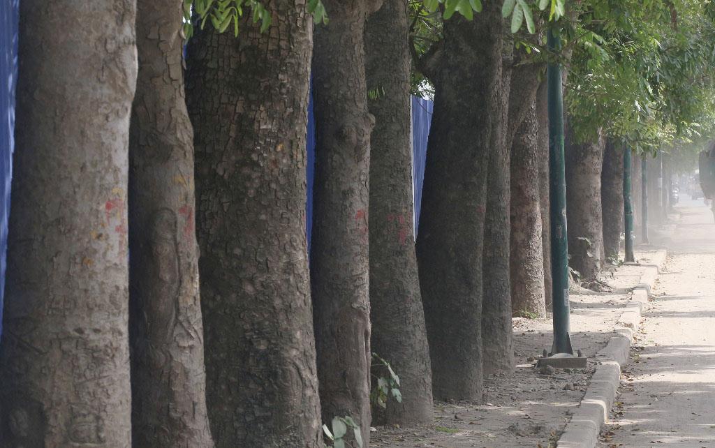 Hà Nội: Nhìn lại 1.300 cây xanh trên đường Phạm Văn Đồng sẽ bị chặt hạ trong 3 tháng tới - Ảnh 5.