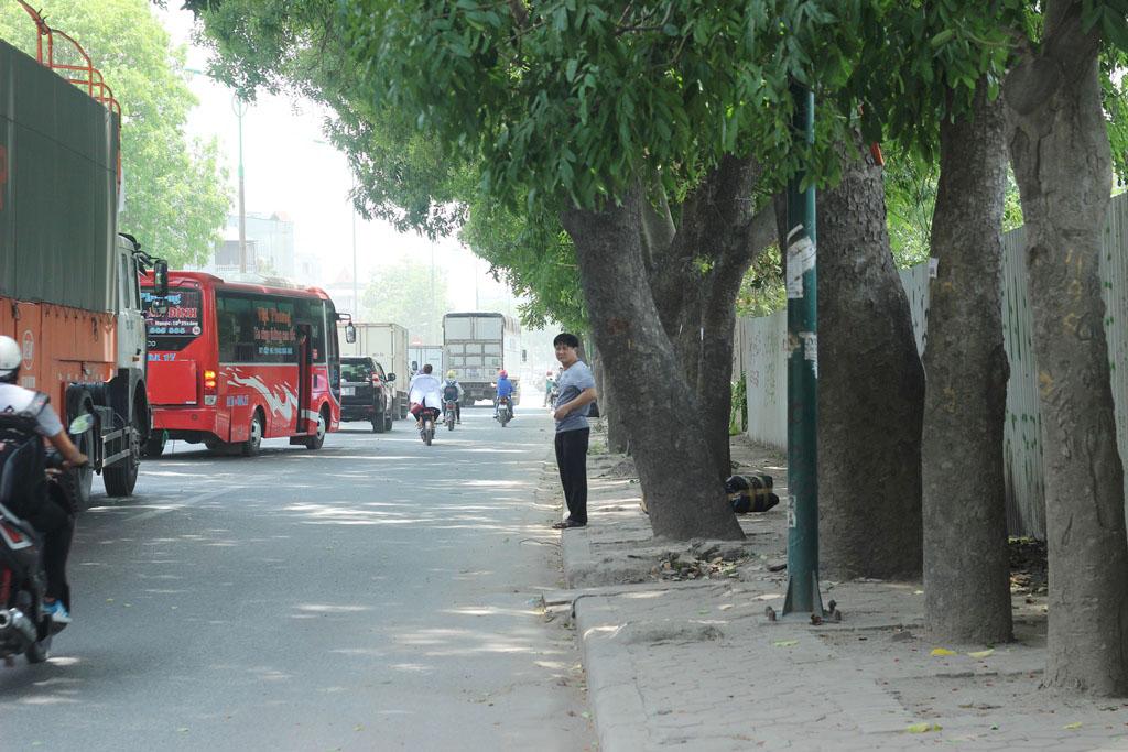 Hà Nội: Nhìn lại 1.300 cây xanh trên đường Phạm Văn Đồng sẽ bị chặt hạ trong 3 tháng tới - Ảnh 10.