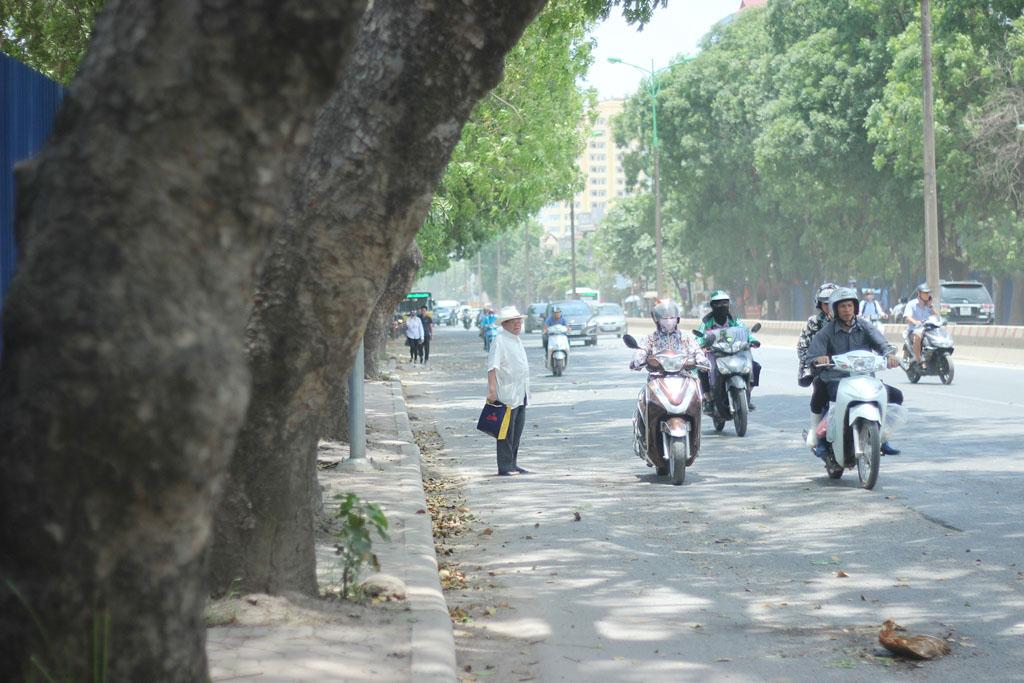 Hà Nội: Nhìn lại 1.300 cây xanh trên đường Phạm Văn Đồng sẽ bị chặt hạ trong 3 tháng tới - Ảnh 9.