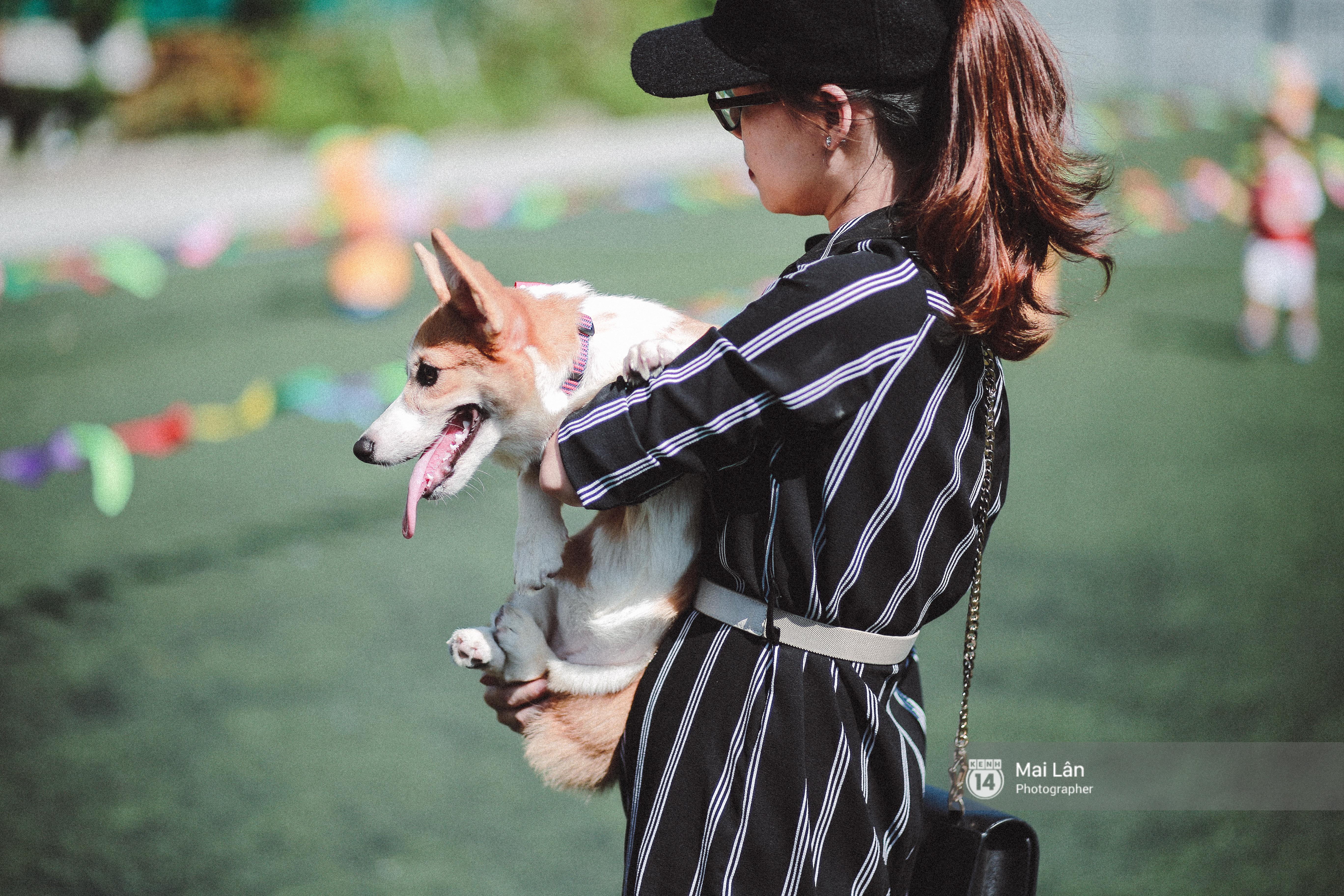 Lễ hội thể thao dành cho chủ và thú cưng độc đáo, đáng yêu nhất Hà Nội! - Ảnh 2.