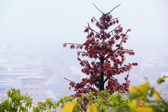 Sương mù dày đặc như Đà Lạt bao phủ khắp Sài Gòn từ sáng đến trưa - Ảnh 9.