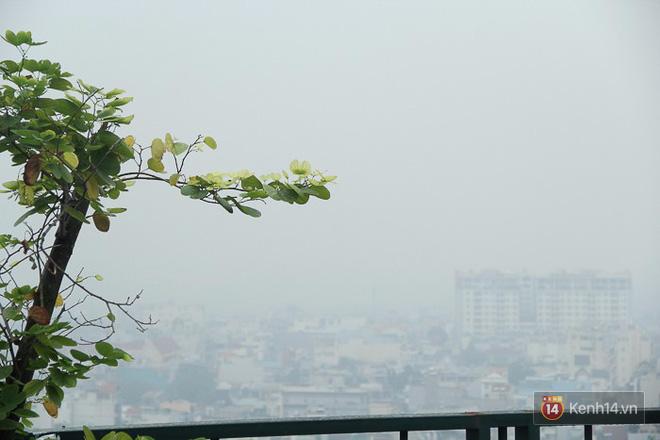 Sương mù dày đặc như Đà Lạt bao phủ khắp Sài Gòn từ sáng đến trưa - Ảnh 13.