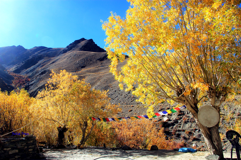 """Mùa thu ở Ladakh: Hành trình trải nghiệm của 1 phụ nữ Việt đến nơi đẹp tựa """"thiên đường ẩn giấu"""" ở Ấn Độ - Ảnh 18."""