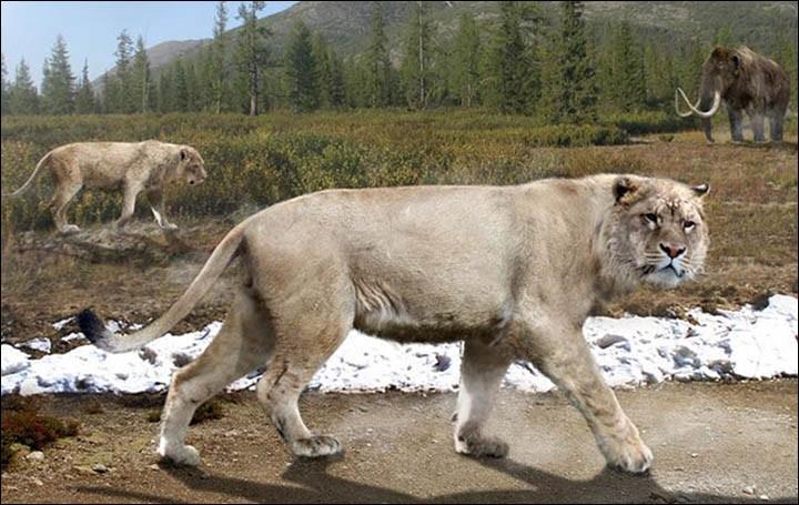 Hồi sinh xác ướp sư tử 50.000 năm tuổi bằng thí nghiệm kiểu Công viên kỷ Jura - Ảnh 5.