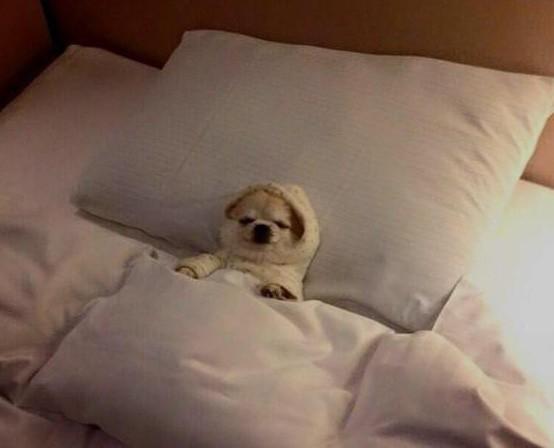 15 chú chó xấu tính chỉ thích độc chiếm một mình một giường mới chịu - Ảnh 3.