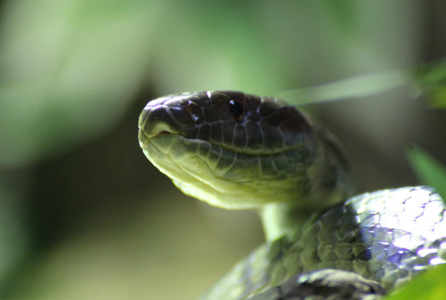 Thiên đường dành cho những người sợ rắn - dù điều kiện hoàn hảo nhưng tuyệt đối không có đến một con - Ảnh 2.