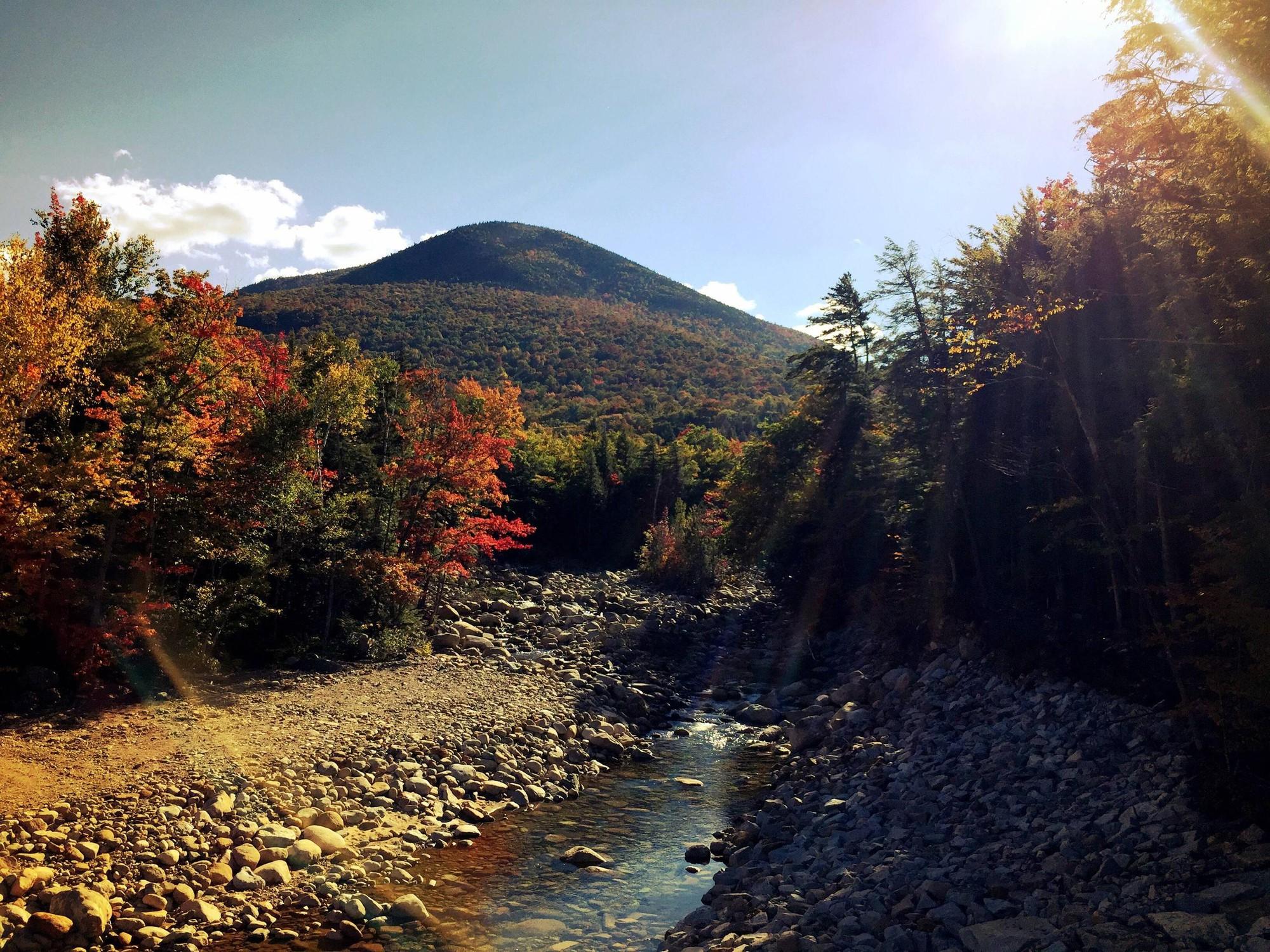 Ngắm phong cảnh đẹp đến ngoạn mục của những khu rừng vào mùa thu - Ảnh 28.