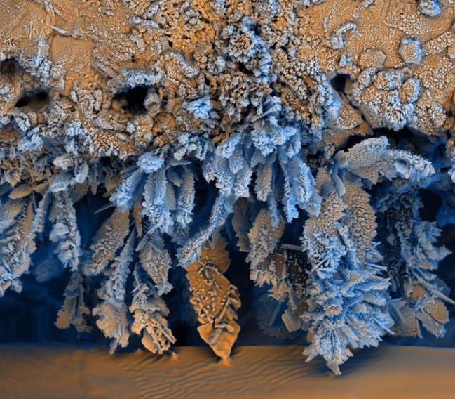 Ai cũng từng nhìn, ăn các thứ này nhưng mấy ai biết dưới kính hiển vi chúng đáng sợ như thế nào - Ảnh 12.