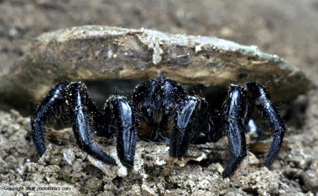Loài nhện còn một khả năng cực kỳ kinh dị mà đến bây giờ khoa học mới phát hiện ra - Ảnh 1.