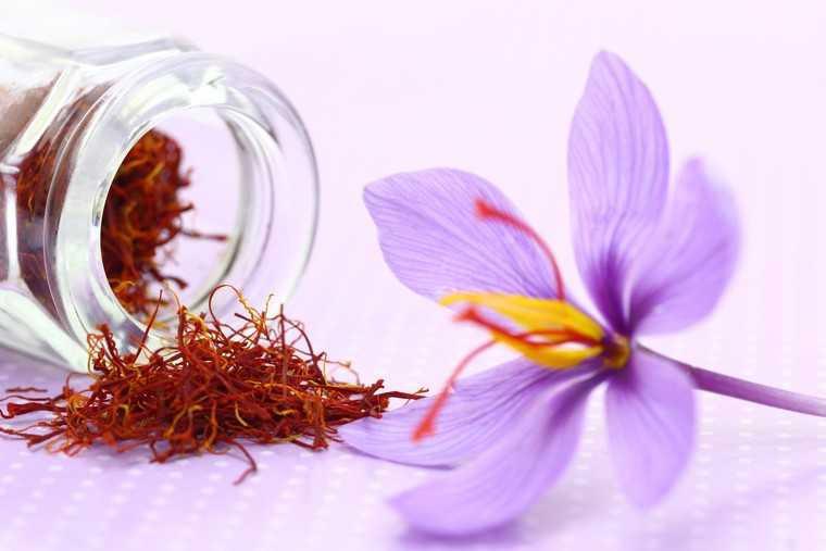 Nhụy hoa nghệ tây và công dụng tuyệt vời với bệnh ung thư