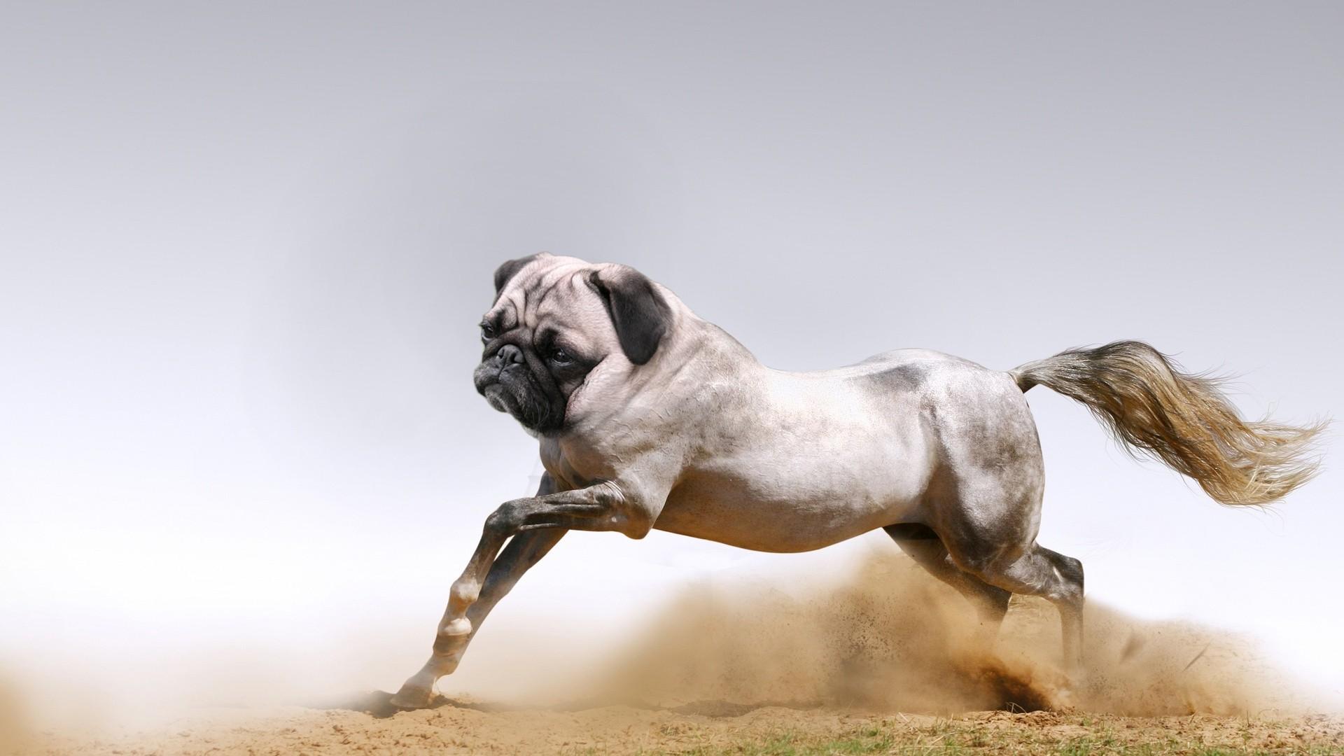 Những loài vật mới chỉ xuất hiện gần đây trong thời đại photoshop - Ảnh 19.