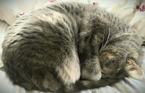 Lũ mèo ngủ gần như mọi lúc mọi nơi và đây là lý do - Ảnh 2.