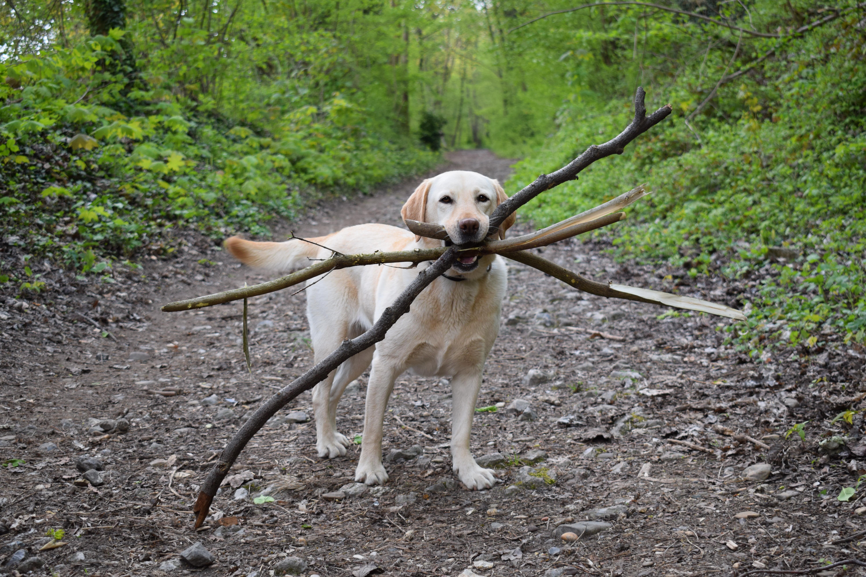 Chú chó ngáo ngơ trở thành nạn nhân của các thánh chế ảnh - Ảnh 1.
