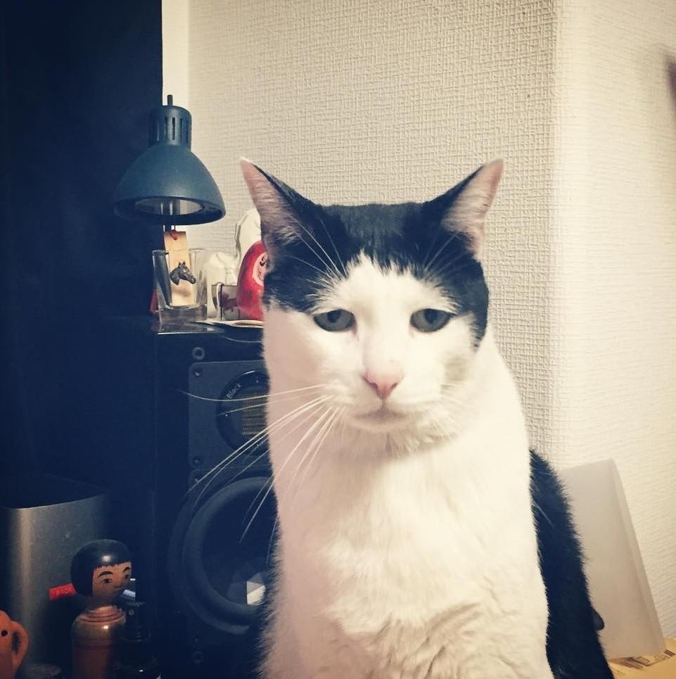 Chú mèo Nhật Bản với gương mặt buồn rười rượi, thương ơi là thương! - Ảnh 3.
