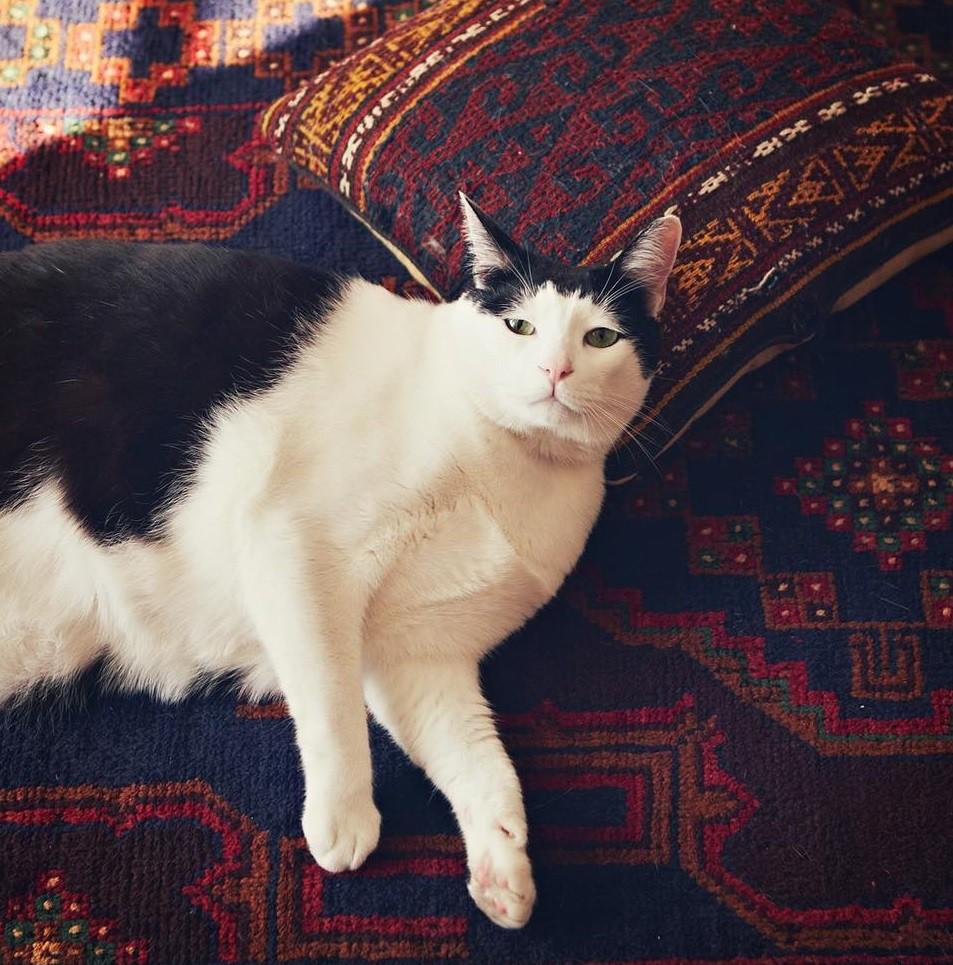 Chú mèo Nhật Bản với gương mặt buồn rười rượi, thương ơi là thương! - Ảnh 11.