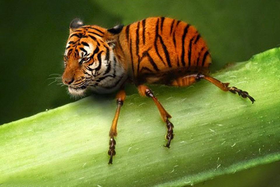 Những loài vật mới chỉ xuất hiện gần đây trong thời đại photoshop - Ảnh 25.