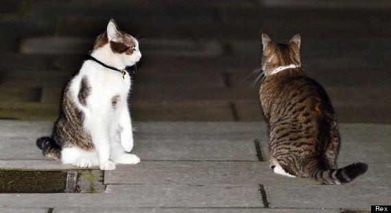 Một thập kỷ trong phủ Thủ tướng của con mèo béo vô dụng nhưng quyền lực nhất nước Anh - Ảnh 6.