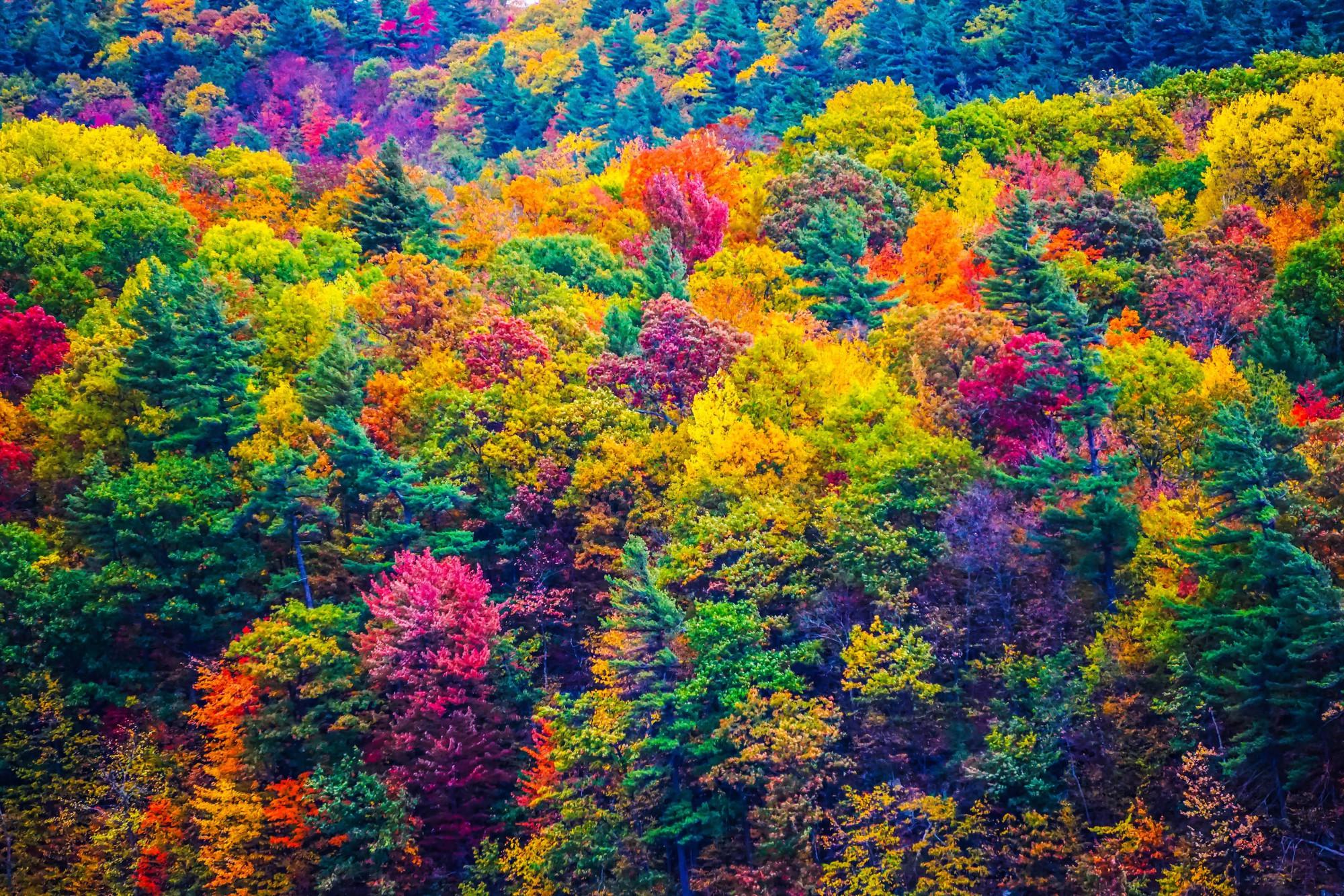 Ngắm phong cảnh đẹp đến ngoạn mục của những khu rừng vào mùa thu - Ảnh 20.
