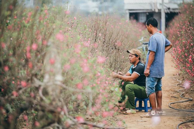 Mùa đông quá ngắn, bạn buồn vì không được mặc đồ lạnh, còn với các làng hoa ở Hà Nội - họ mất Tết! - Ảnh 12.