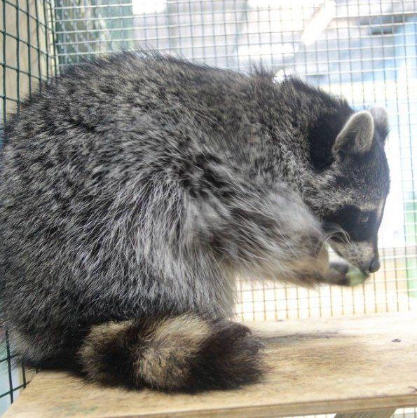 Chụp ảnh cùng mẫu thiếu vải, chú gấu mèo bị tổn thương tâm lý nặng nề - Ảnh 4.