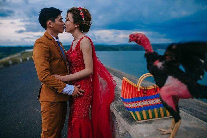 Ảnh cưới của chú rể mê gà chọi, chụp kiểu gì cũng được miễn là phải có gà - Ảnh 2.