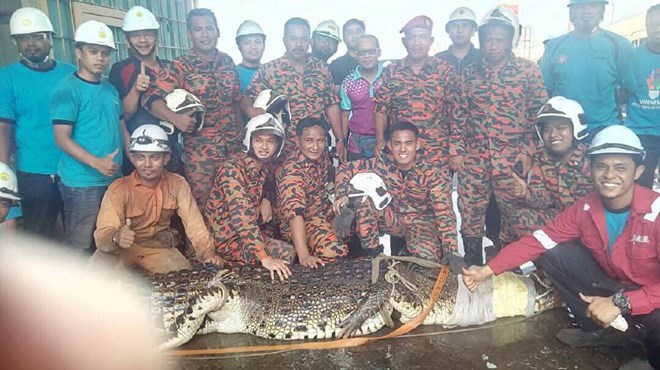 Bắt được cá sấu dài 6 mét, nặng một tấn sau 11 giờ săn đuổi - Ảnh 1.