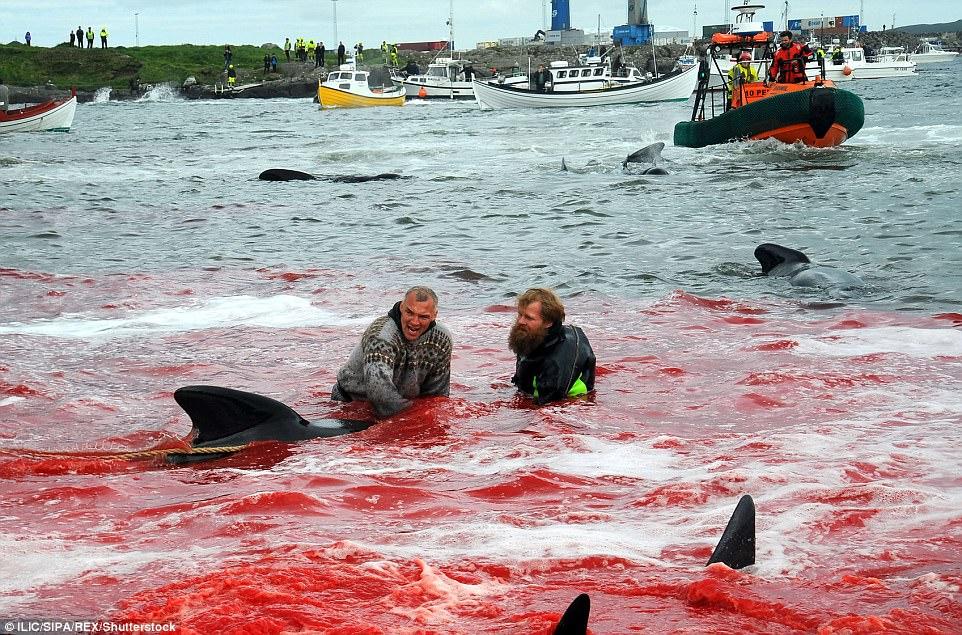 Hình ảnh bờ biển Đan Mạch nhuốm đỏ màu máu trong vụ thảm sát cá voi gây phẫn nộ trên toàn thế giới - Ảnh 2.
