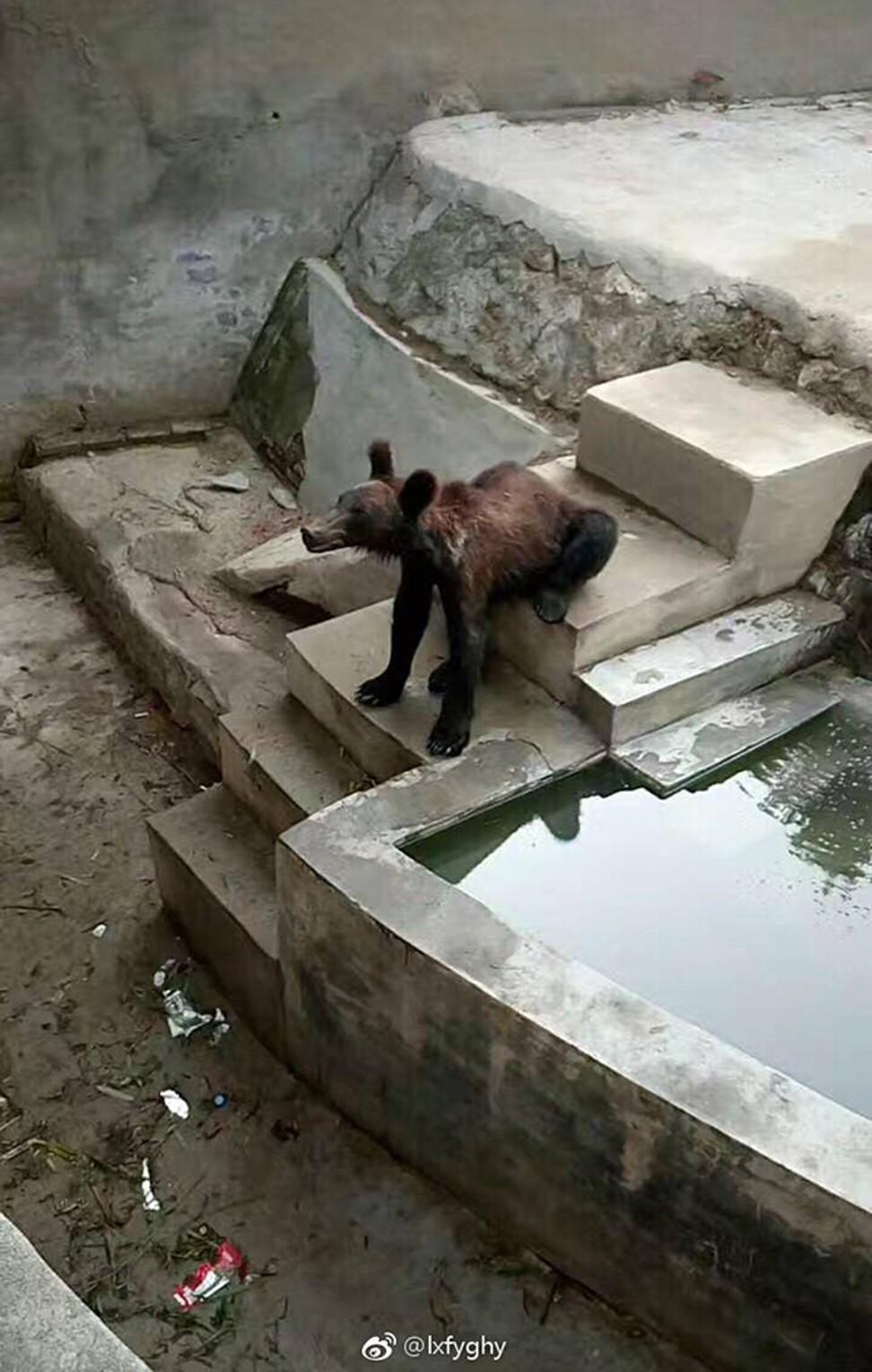 Trung Quốc: Chú gấu nâu gầy trơ xương vì bị sở thú bỏ đói,