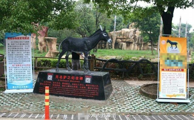 Cái kết bất ngờ của con lừa bị ném thẳng vào chuồng cọp tại sở thú Trung Quốc - Ảnh 1.